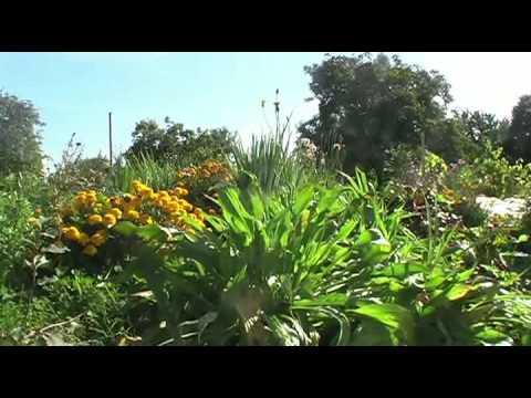Herbstliche Gartenimpressionen