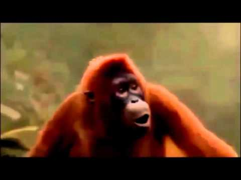 Affe tanzt hoch die Hände wochenende