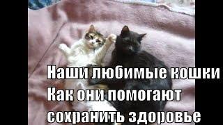 Кошка и здоровье человека Этого вы точно не знали