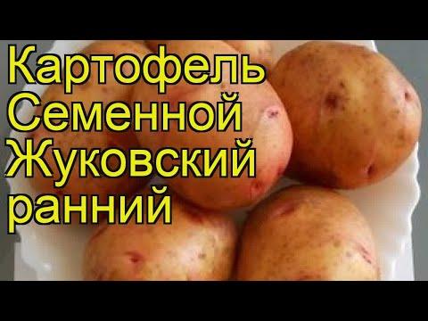 Картофель семенной Великан. Краткий обзор, описание характеристик, где купить картофель