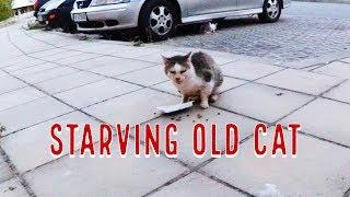 Feeding the Old Cat