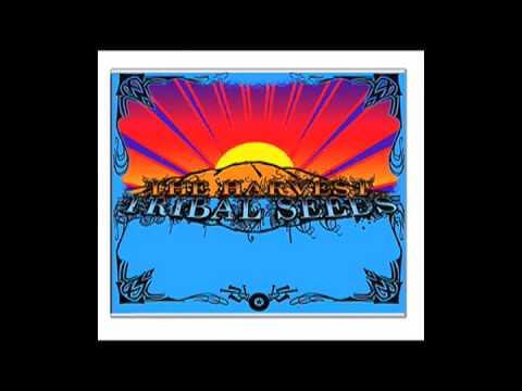 Tribal Seeds - Love Psalm