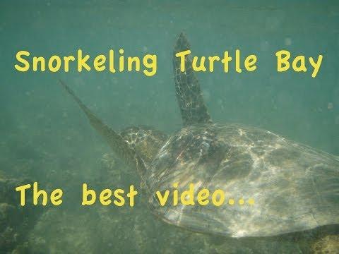 Turtle Bay Resort, Oahu, Hawaii, Snorkeling