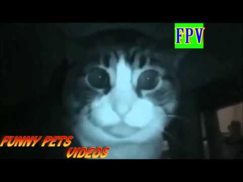 scary cat vine
