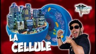 LA CELLULE : UNE VILLE MAGNIFIQUE - BMShow