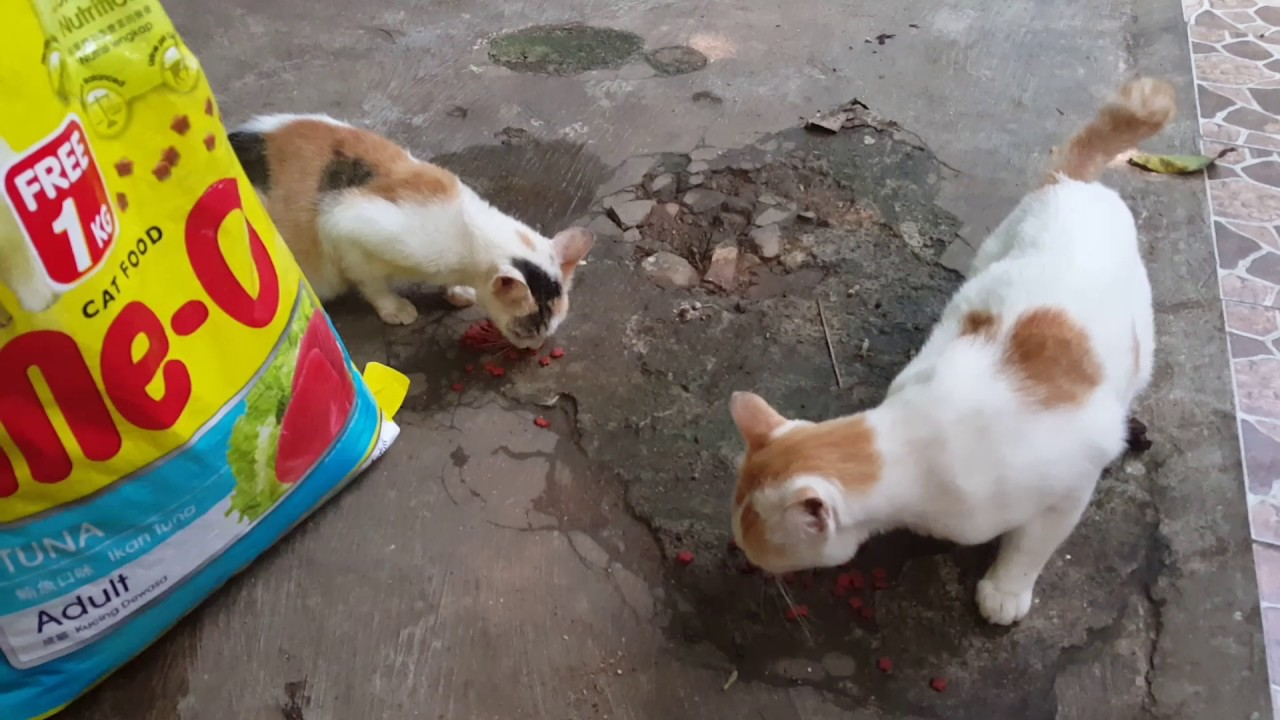 Kucing Kampung Dikasih Makanan Kucing Merk Me O Youtube