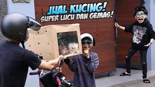 Download KAMPRET!!! BOCIL JUAL ANAK KUCING LUCU KESAYANGAN FROST DIAMOND! DIA PASTI MARAH BESAR!!!