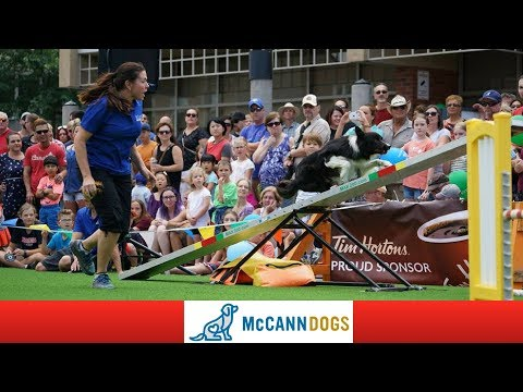 Live! McCann Dog Stars Show Dundas Cactus Festival