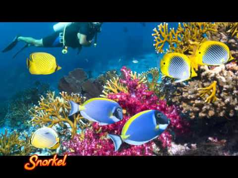 Bali Tour Package 34 Turtle Island Snorkeling And Dreamland Tour