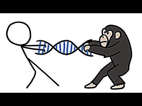 На сколько процентов мы шимпанзе?