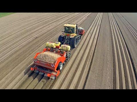 Potato Planting  | Challenger MT 765D + Dewulf Miedema planter | Veerman Goudswaard