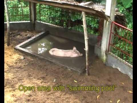 Natural piggery and poultry farm Carolina - Naga City