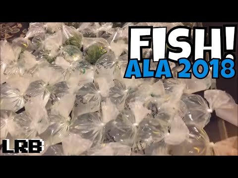 American Livebearer Association Convention 2018 Endlers and Guppies and More O My!