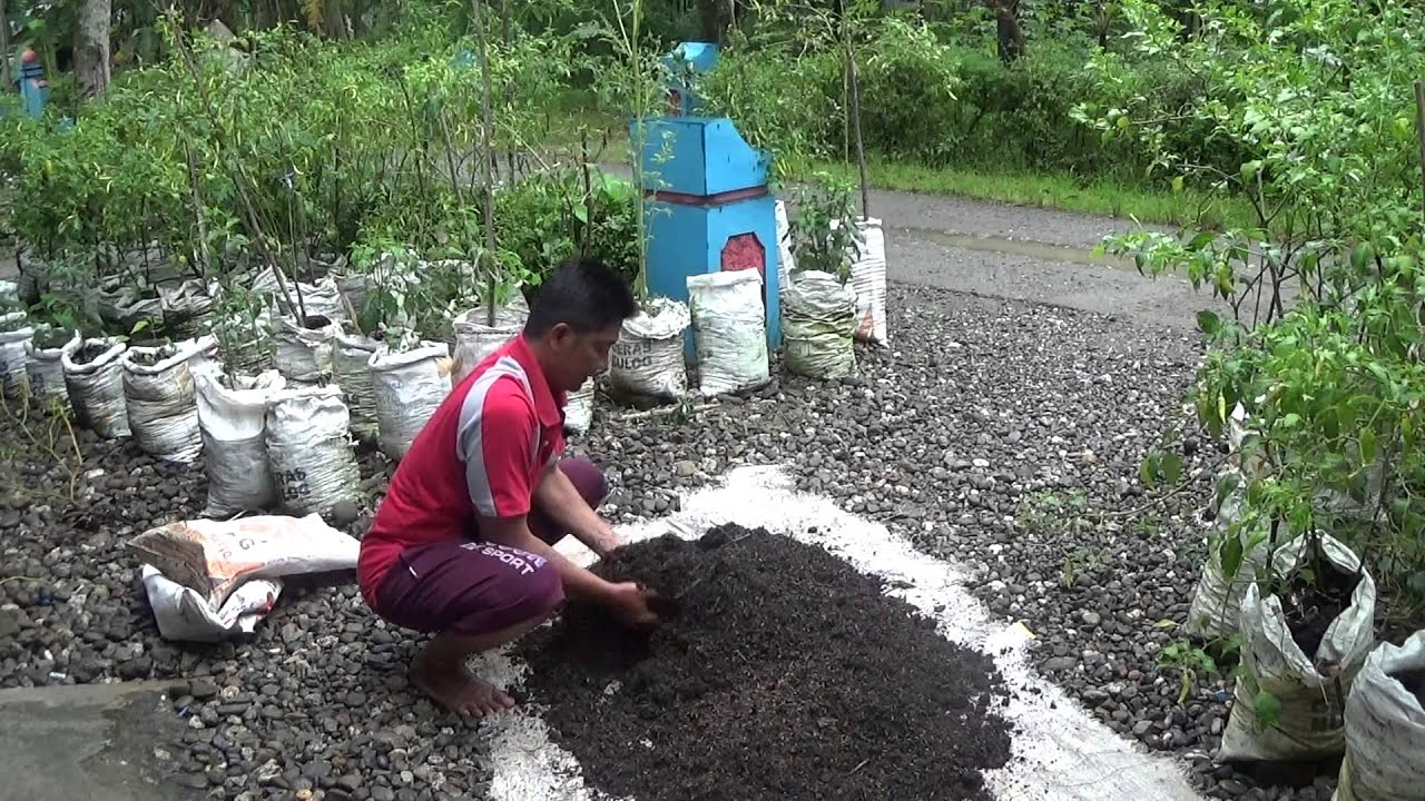 Cara sederhana membuat bokasi pupuk kompos arang sekam dan