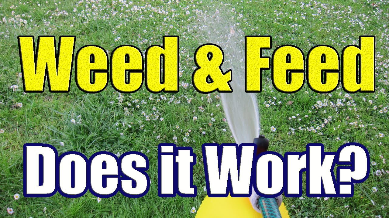 How To Ly Liquid Weed N Feed The Results Of And With Dazndi Properties You