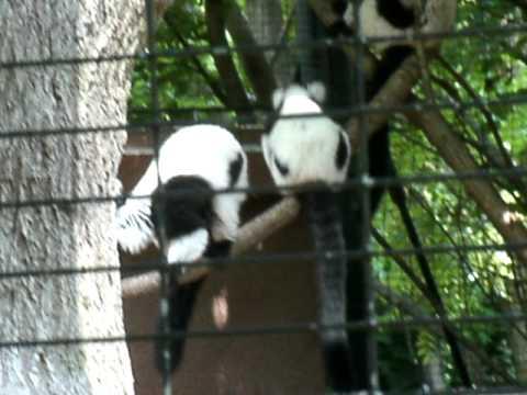lemars animal - YouTube
