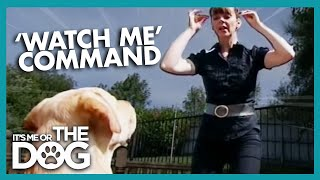 How to Use Vocal Commands   It's Me or the Dog
