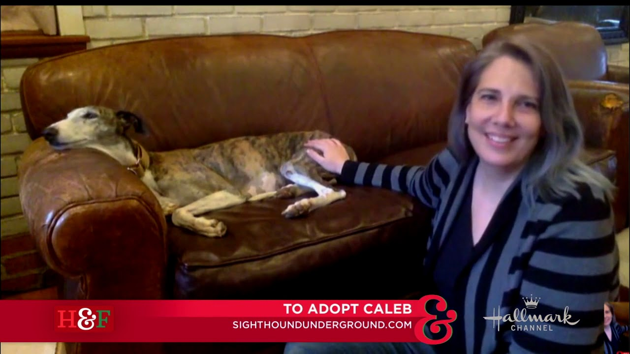 Larissa Wohl's Pet Adoption: Caleb