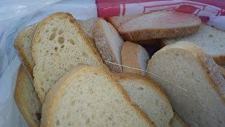 Króliki i suchy chleb