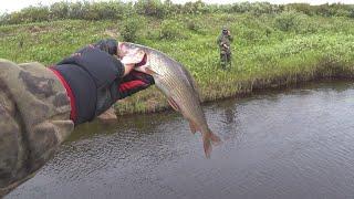 РЫБАЛКА В ТУНДРОВОМ РУЧЬЕ ЛОВЛЯ ХАРИУСА ЩУКИ И ОКУНЯ СПИННИНГОМ Fishing