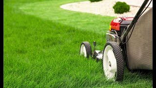 How to Properly Mow a Lawn - Organo Lawn
