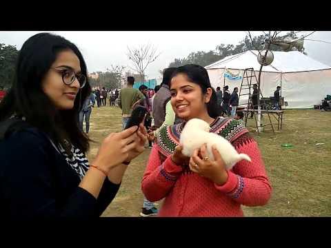Dog Show Patiala - Bhola Shola