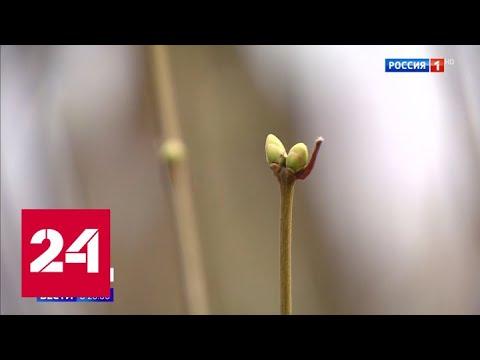 Январь или апрель: капризы погоды по всей России - Россия 24