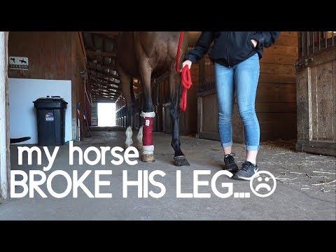 MY HORSE BROKE HIS LEG!