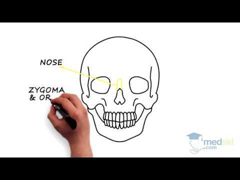 Plastics – Facial Injuries: By Tara Lynn Teshima M.D.