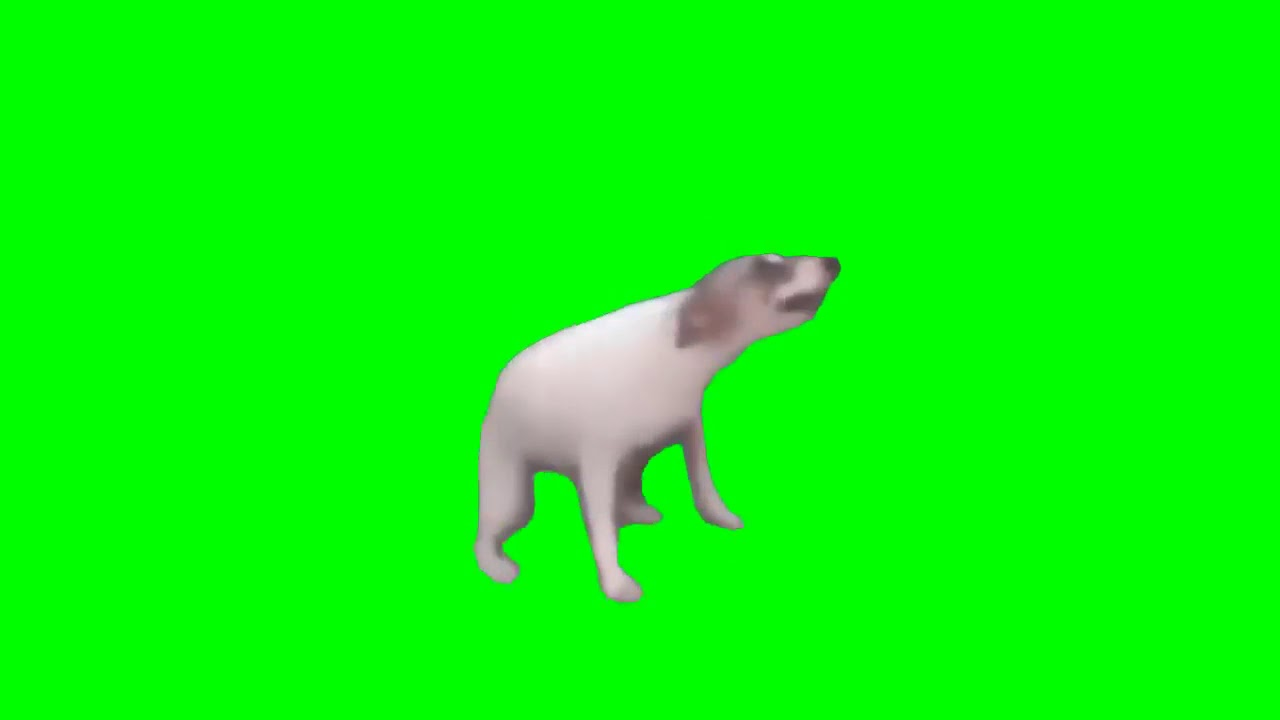 Dancing dog Meme template - YouTube