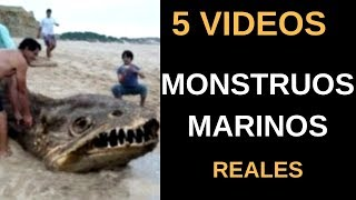 5 Vídeos de Monstruos Marinos Reales l Pasillo Infinito
