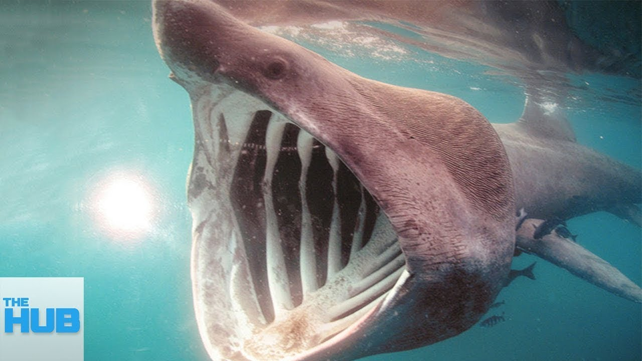 The Most RARE Shark Species Hidden in The Ocean