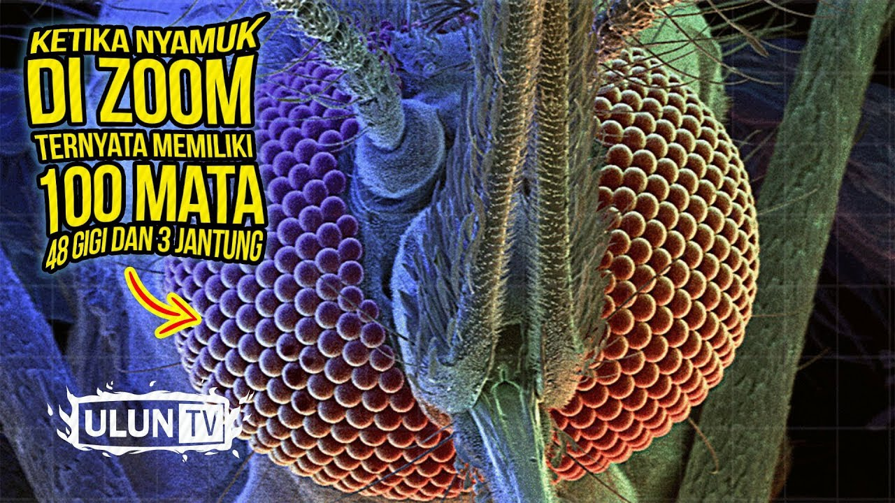 Seekor nyamuk diletakkan di bawah mikroskop, diperbesar 400 kali!, ini faktanya #beritahariini