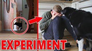 Wie reagiert mein Hund, wenn ich weine? (EXPERIMENT)