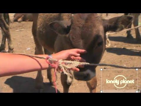 Livestock market in Kazakhstan - Lonely Planet travel video