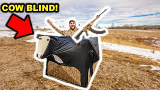 HUNTING My Farm while DISGUISED as a COW!!! (Will It Work?)