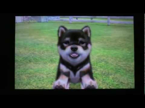 nintendogs + cats special race les shiba inu - YouTube