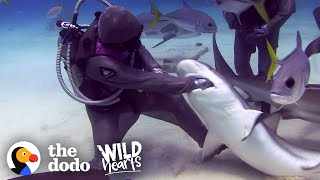 Woman Has Removed Over 300 Hooks From Sharks' Mouths | The Dodo Wild Hearts