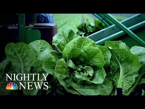 Antiquated System Hampers FDA In Tracking Deadly E. Coli Outbreaks | NBC Nightly News