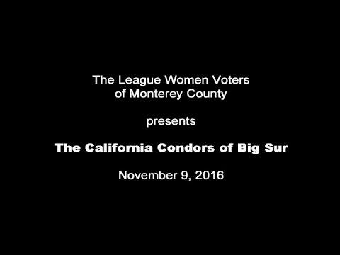 The California Condors of Big Sur