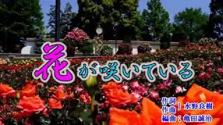 新曲『花が咲いている』石川さゆり 2018年8月15日発売