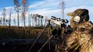 Black grouse hunting in Jämtland 2017