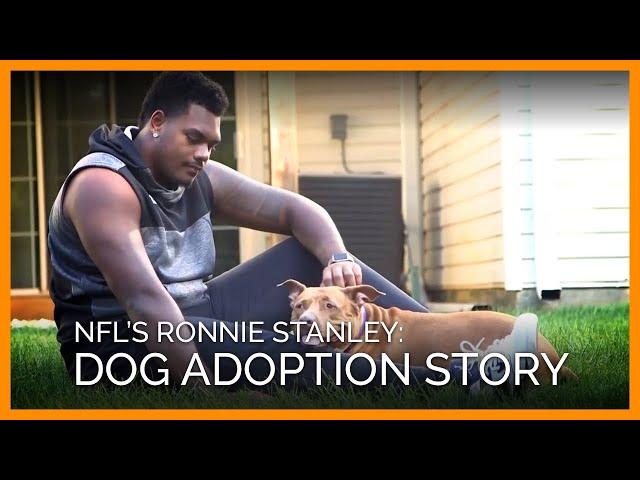 982f1384ce9 The NFL Celebrates National Puppy Day - NFL.com