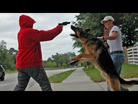 loyal-dogs-saved-people-life-compilation-2017