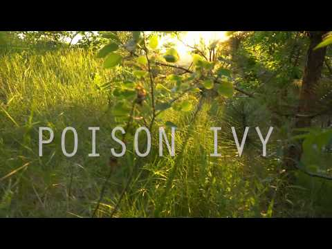 Poison IVY ID and Treatment