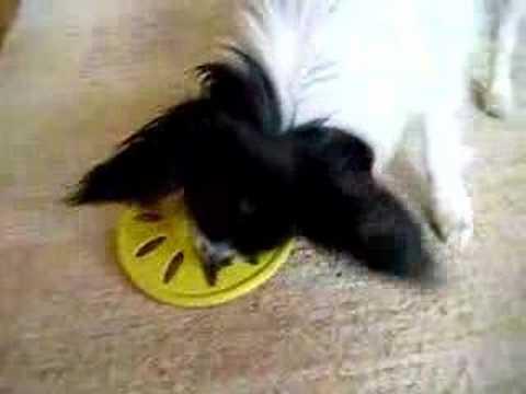 Neila und ihr Frisbee