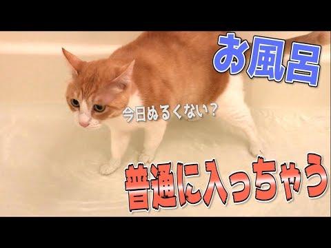 お湯張り中のお風呂に猫が入ってきてそのまま長風呂し始めたwww