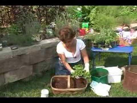 Container Gardening: Container Herb Garden   YouTube
