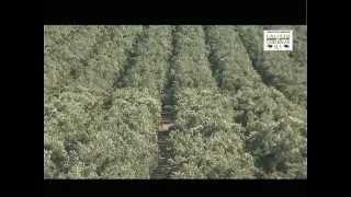 Elaboración Aceite de Oliva Gourmet. Fabricación en la Almazara de Castillo de Tabernas. Almeria YouTube Videos