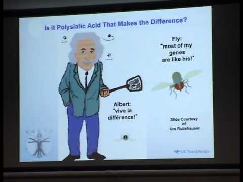 Peter Gallagher Memorial Glycomics Lecture, 2011